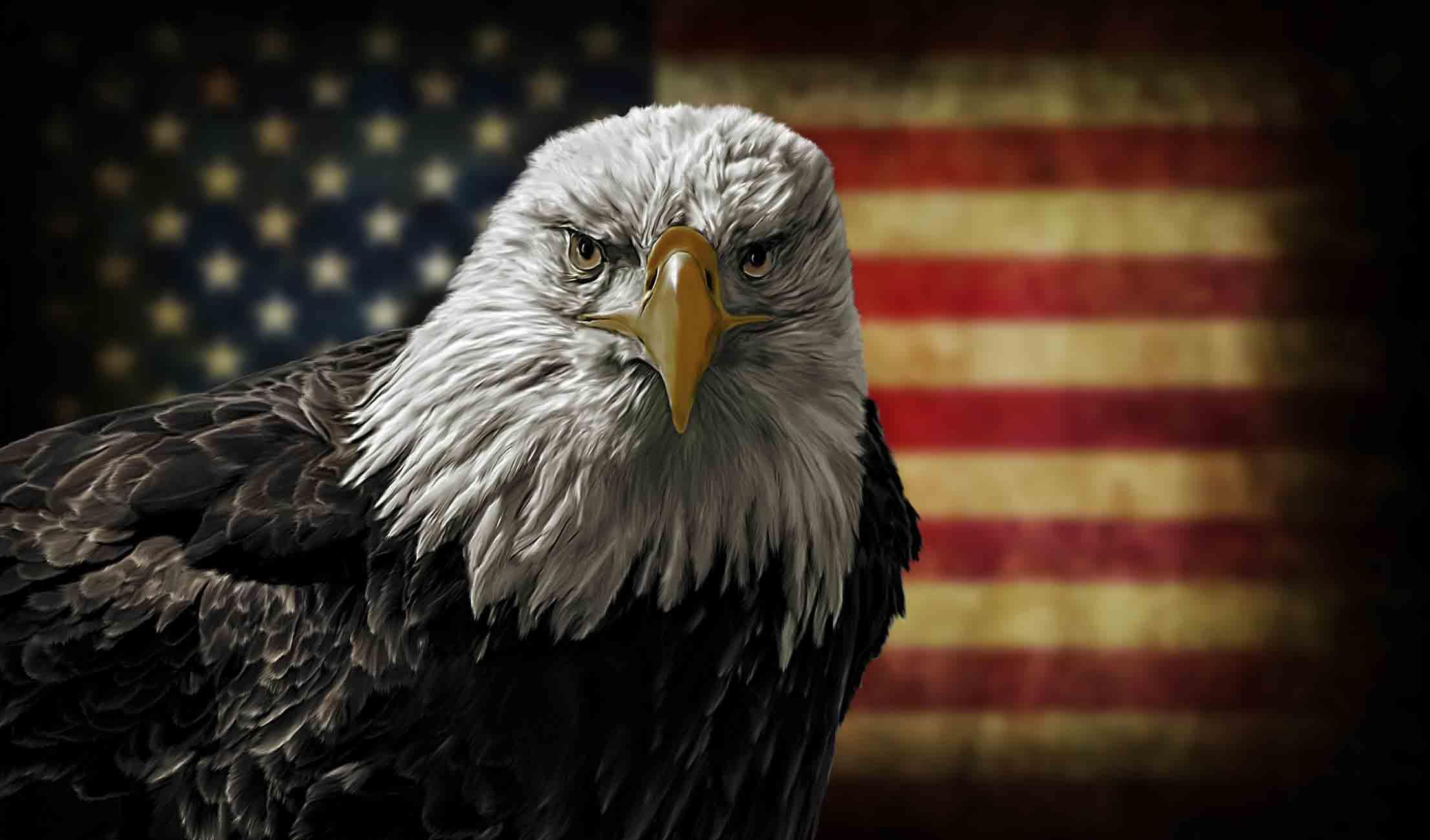 Freedom Bird.